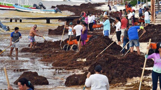 Sargazo, la pesadilla vuelve a Cancún